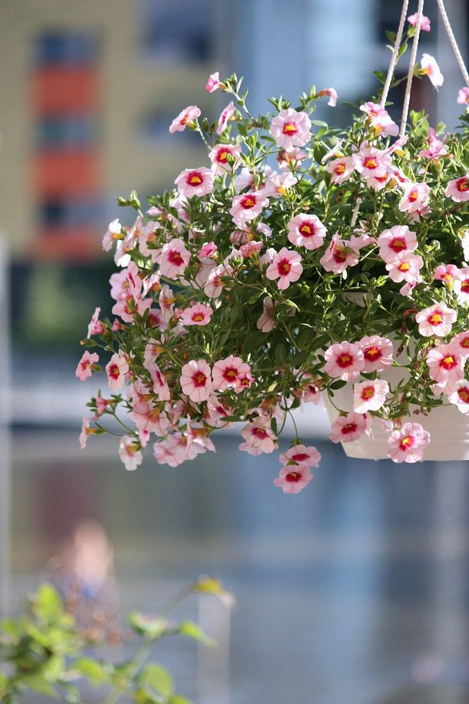 kukka-amppeli
