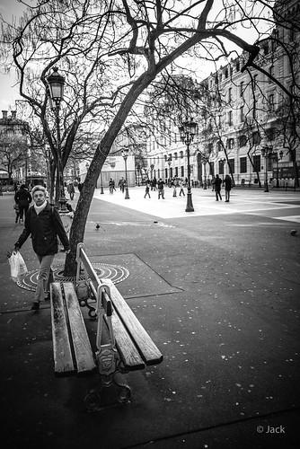 a bench & a tree
