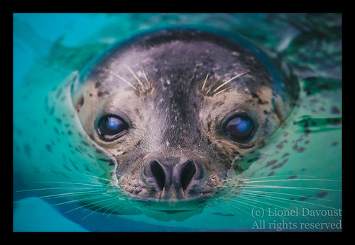 Close up with grey seal