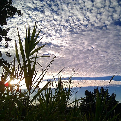 Fields of Cotton #sunrise #mtdiablo #lasjuntas #summer #clouds #bamboo #clickthing