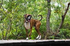exploring at the dog park by Bl.Mtns.Grandma