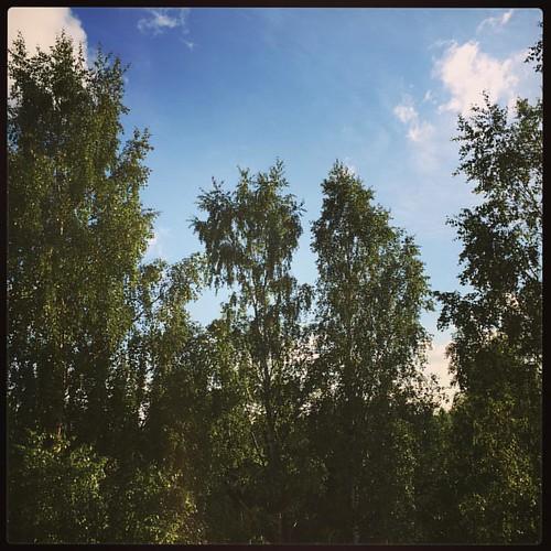 Kun parvekkeelta on tällaiset näkymät, voi kuvitella syövänsä illallista puumajassa. ❤️ (Ja herätä 3:40 lintujen karjuntaan...) #trees #parveke #sky #summer #mittumaari #100happydays 25/100