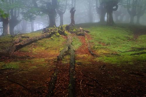 Parque Natural de #Gorbeia #Orozko #DePaseoConLarri #Flickr - -495