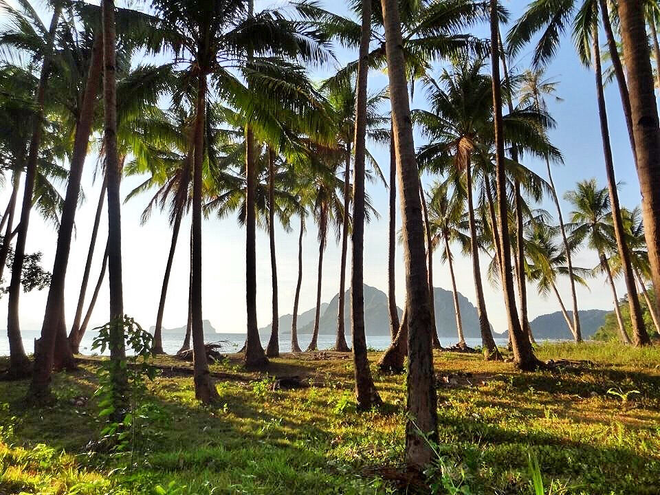 El Nido Palm Trees 2 - Copyright Travelosio