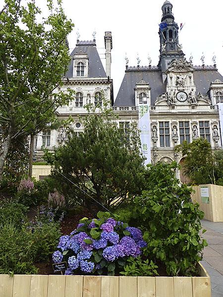 Hortensias et hôtel de ville