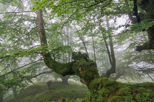 Parque Natural de #Gorbeia #Orozko #DePaseoConLarri #Flickr - -616