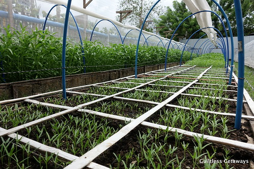 cervantes-farm-square-foot-cdo.jpg