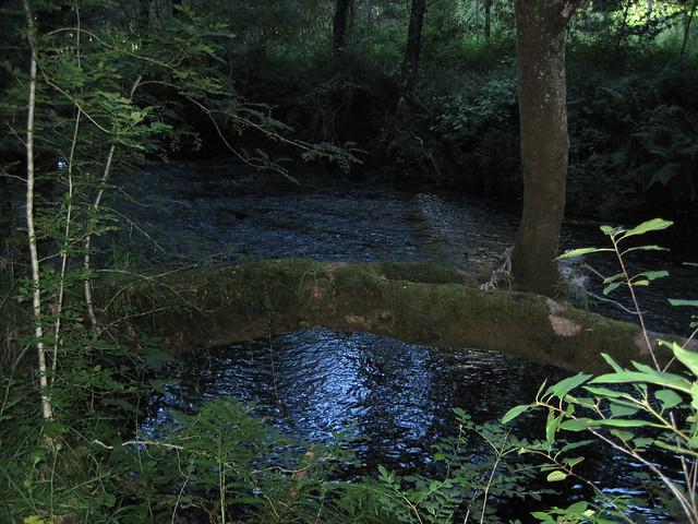 Río Dubra en la Ruta do Río Dubra / Devesa de Gontar