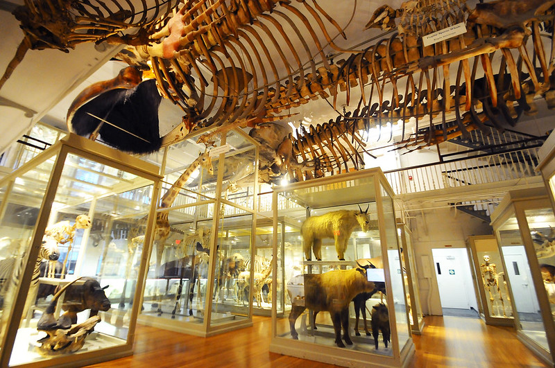 Harvard Museum of Natural History - Cambridge