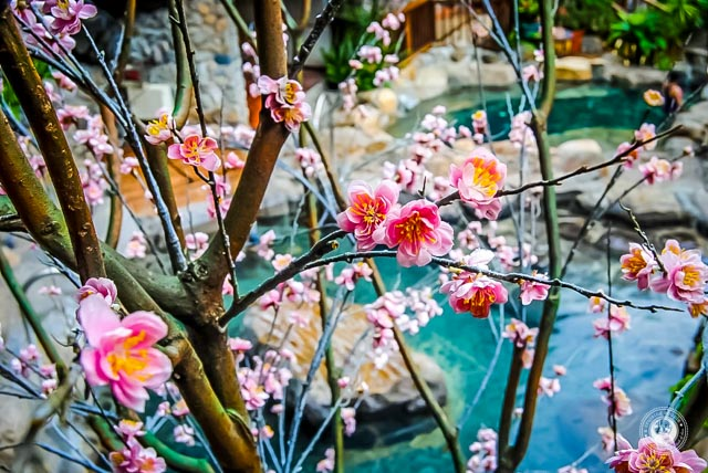Taiwanese Hot Springs The Ultimate Guide To Taiwans Hottest