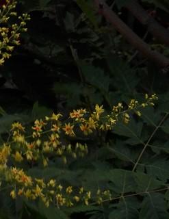 Florecillas de árbol