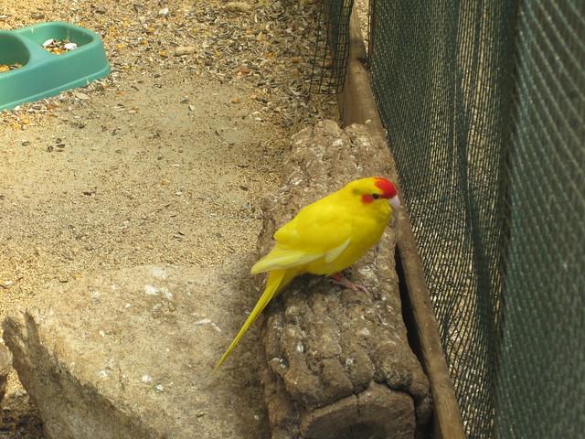 Pájaro en Avifauna Parque Zoológico Ornitológico
