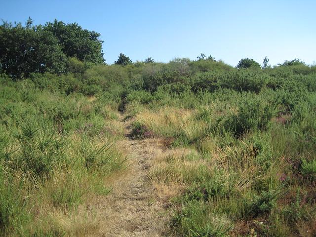 Subida al Castro Lupario en la ruta del Castro Lupario y río Sar