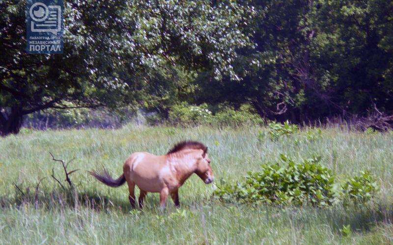конь копия