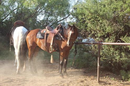 Texas Musical 061816 (79)