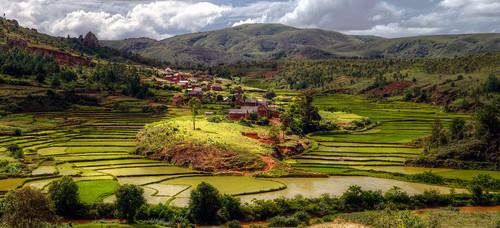 rice fields village, madagascar