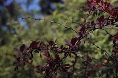 Obiektywy m42 - zdjęcia przykładowe