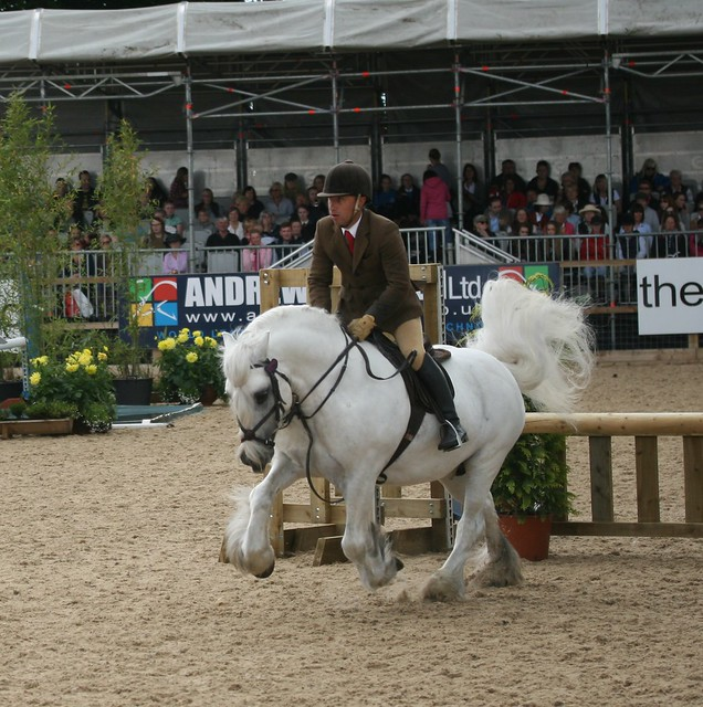 Mountain and Moorland Working Hunter Ponies