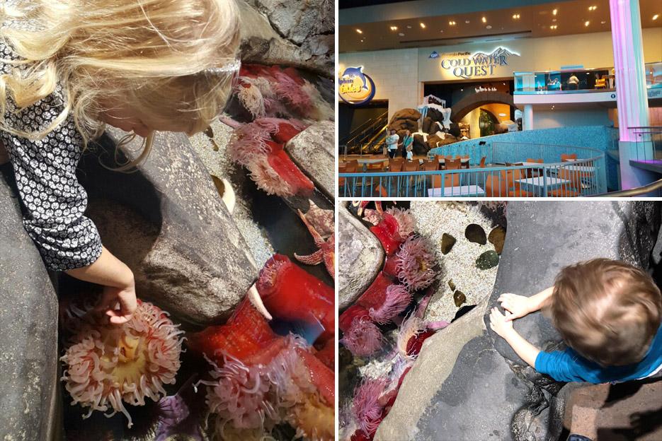 101615_aquarium08