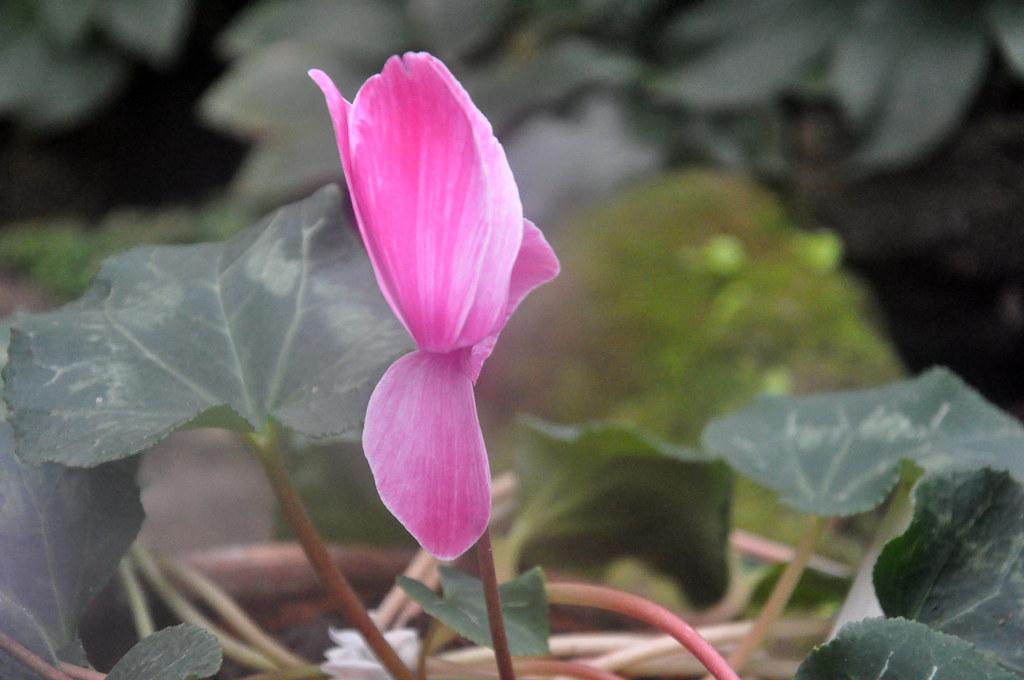 Ботанический сад DSC_0063
