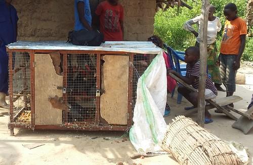 Parrots and fish traps