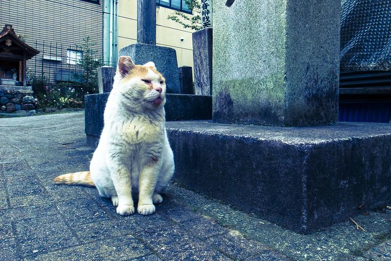 お猫様-20160506-1