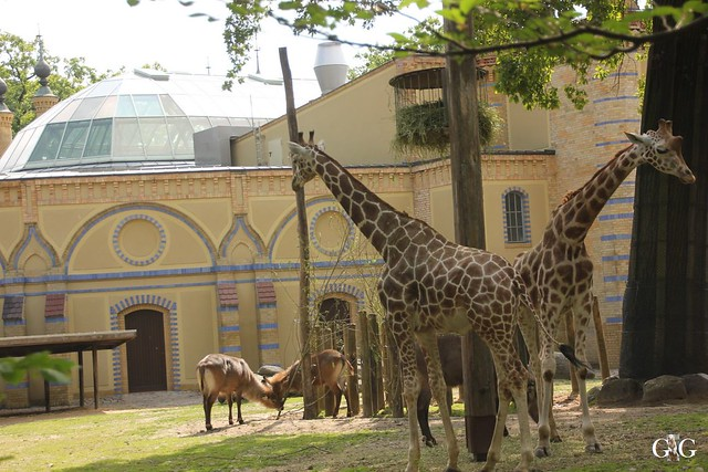 Sonntags-Besuch Zoo Berlin 19.06.20165