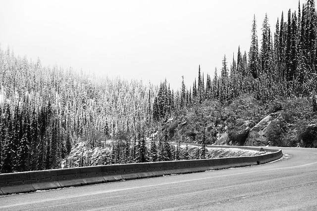 road through snowy trees