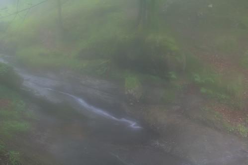 Parque Natural de #Gorbeia #Orozko #DePaseoConLarri #Flickr - -505