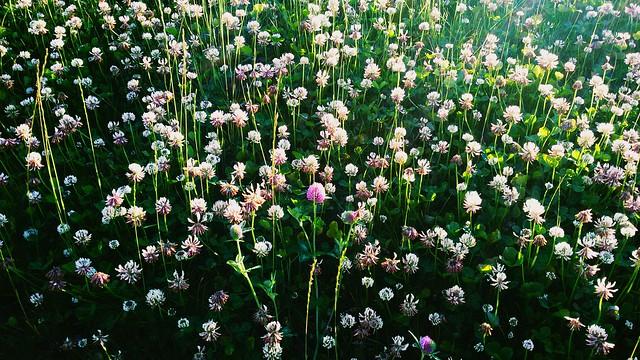 Розовый партизан на белом поле ☺