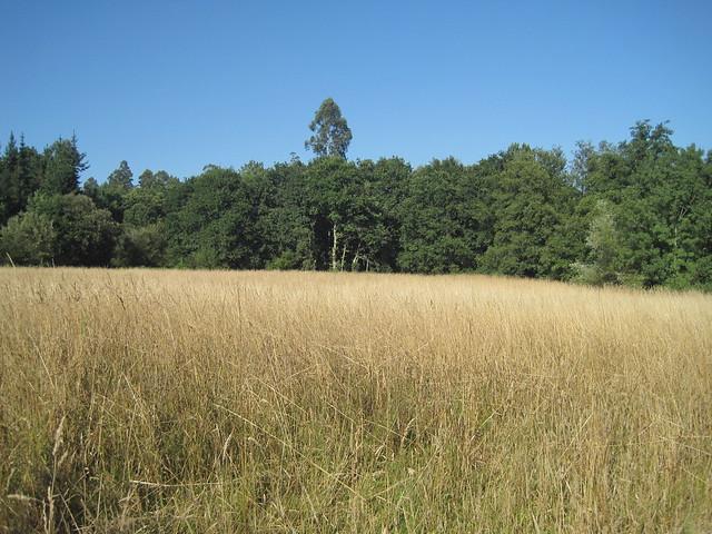 Campo en la ruta del Castro Lupario y río Sar