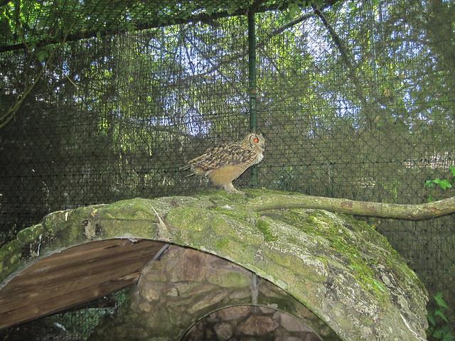 Búho Real de Bengala en Avifauna Parque Zoológico Ornitológico
