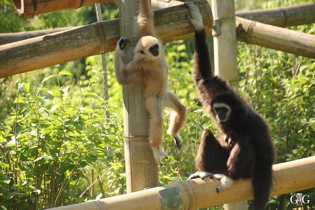 Tierpark Friedrichsfelde 29.05.201614