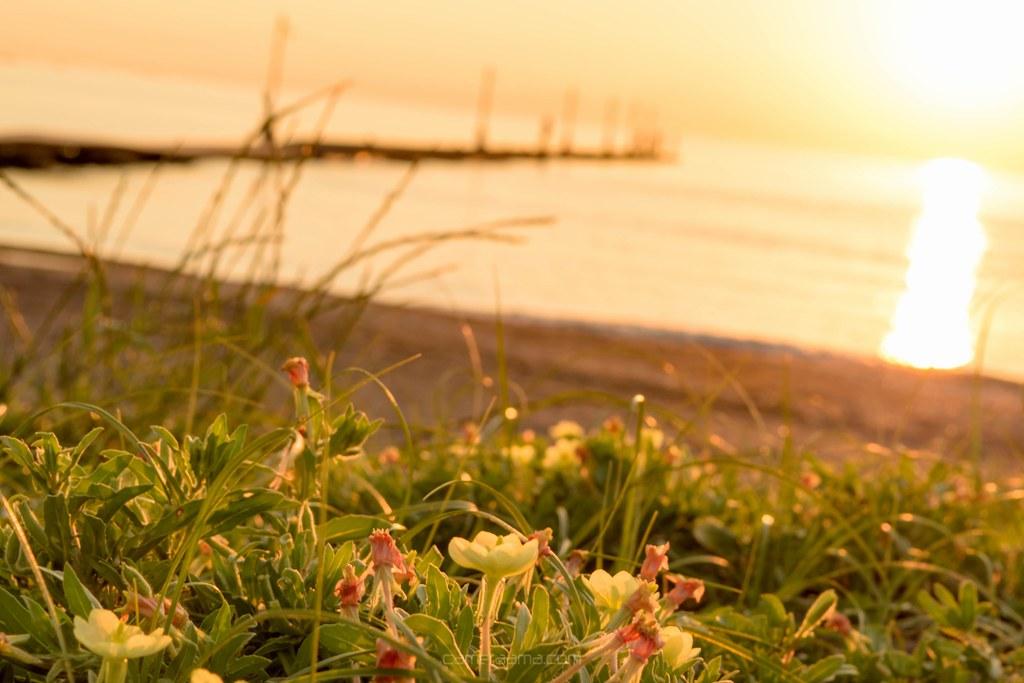 原岡海岸に差し込む夕日と草花