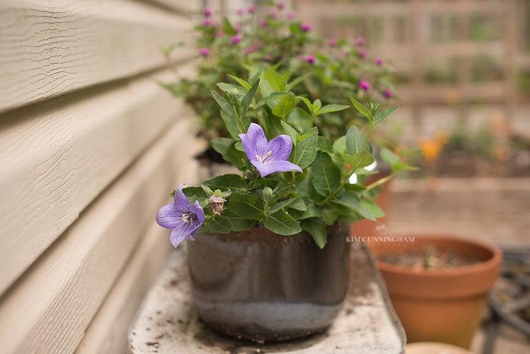 summer flowers 01-750