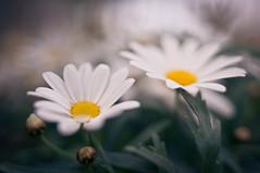 Flower_41
