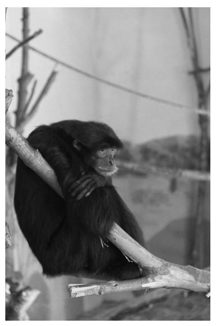 Syracuse_Rosalind Zoo3