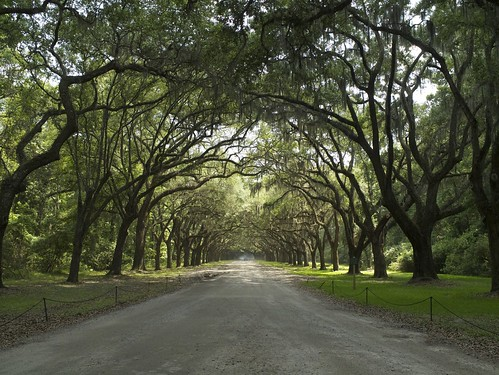 P1190111 薩凡納 Wormsloe Historic Site 白人蓄黑奴遺跡,橡樹長廊背後故事 wormsloe historic site savannah