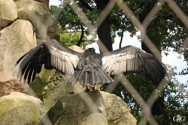 Sonntags-Besuch Zoo Berlin 19.06.201644