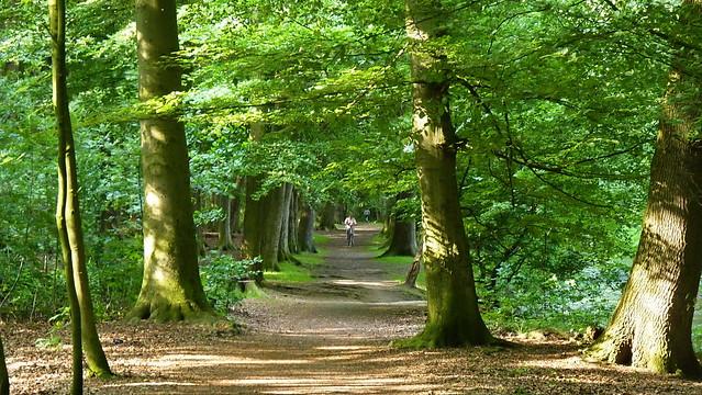 Hache Wald