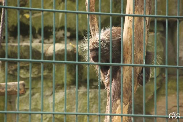 Tierpark Friedrichsfelde 29.05.201698