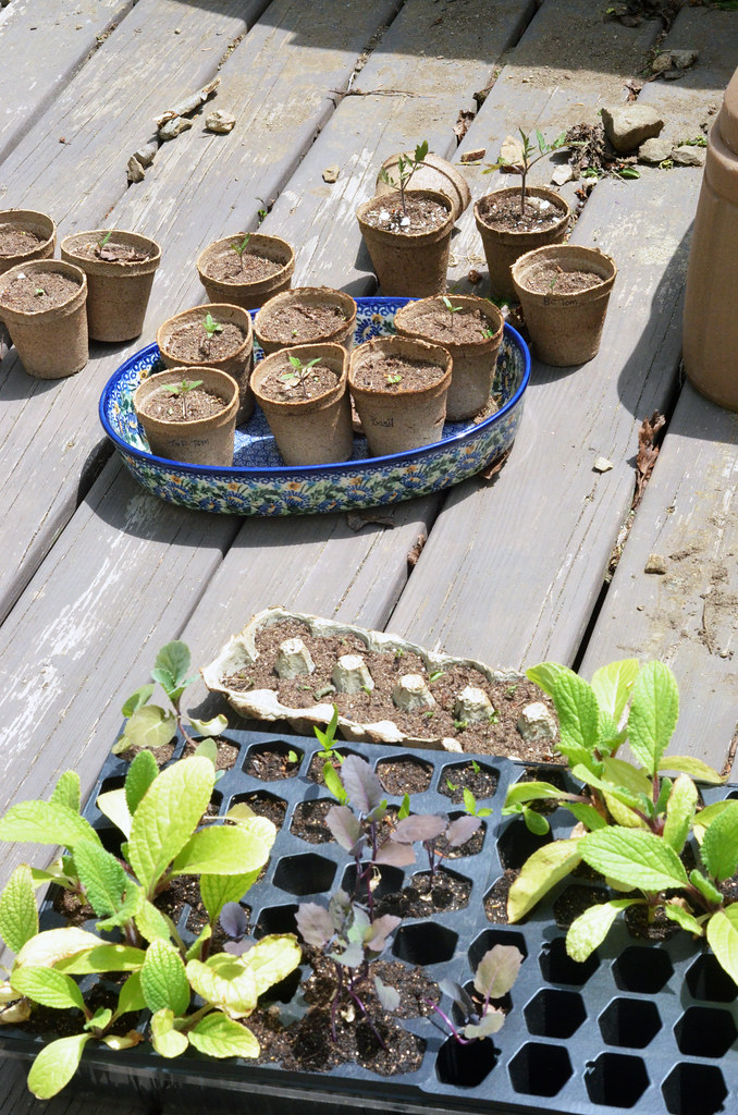 Victory Garden: May 2016
