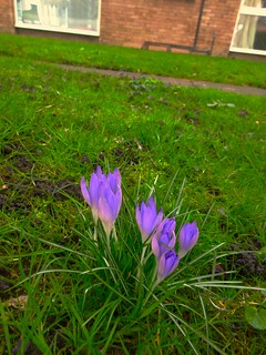 Flowers end February, London