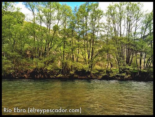Río Ebro - Coto de Pesquera de Ebro (Burgos)
