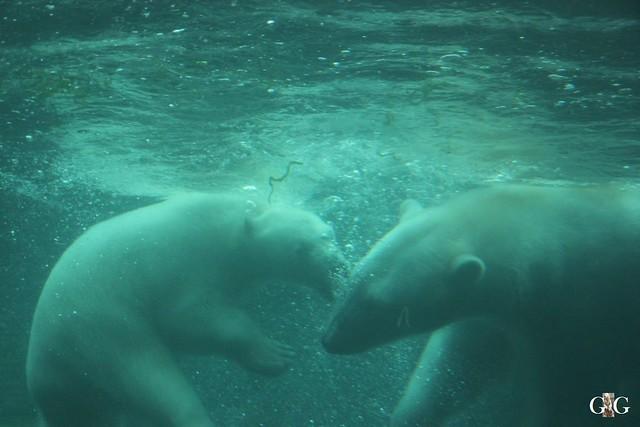 Besuch Zoo am Meer 25.06.201612