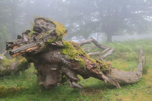 Parque Natural de #Gorbeia #Orozko #DePaseoConLarri #Flickr - -637