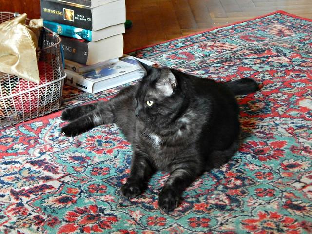чёрный кот Муся, книжки и корзинка | horoshogromko.ru