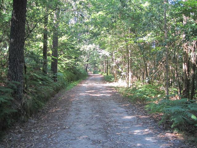 Pista Forestal en la ruta del Castro Lupario y río Sar
