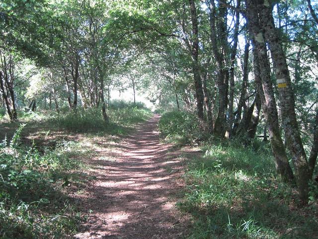 Sendero de la ruta del Tambre en Sigüeiro