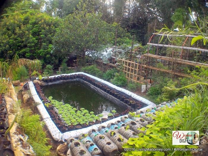 LivingMarjorney-Jaya-Secret-Garden-Pond
